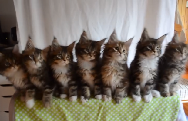 These cats know how to keep it in step